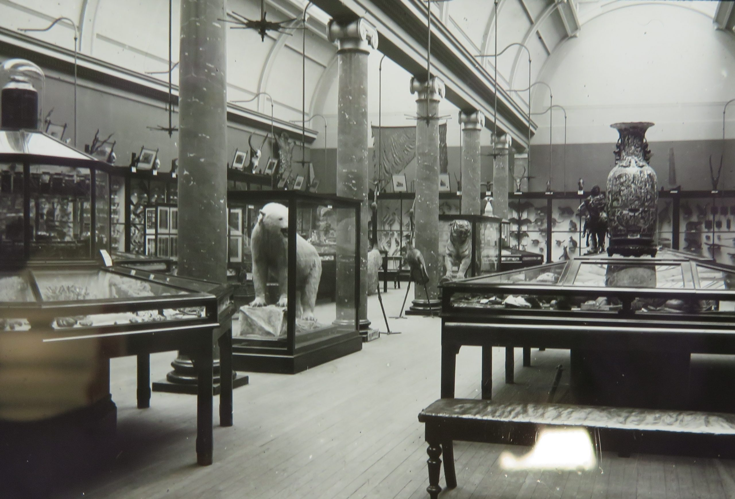 Archive photo of the Pillar Gallery, including bear and tiger exhibits.